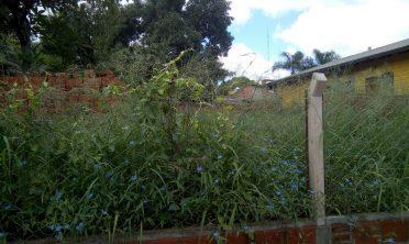 Multaron a propietarios de terrenos baldíos sucios