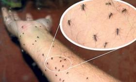 Científicos del INTI desarrollan telas que repelen a los mosquitos