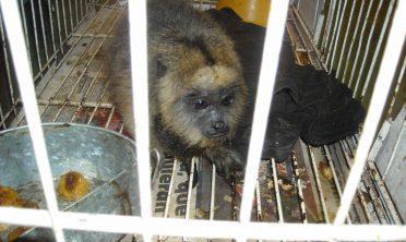 Tráfico ilegal en Argentina: se decomisan más de 2600 animales por año