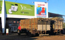 San Javier: producirían 100 mil toneladas de cañas de azúcar