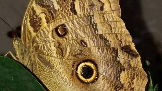 Ecoconciencia en la tierra de las mariposas
