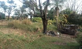 Un terreno abandonado; un gran reservorio de mosquitos