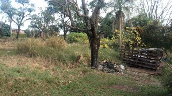 Dengue: multas de hasta 40 mil pesos por terrenos baldíos sucios