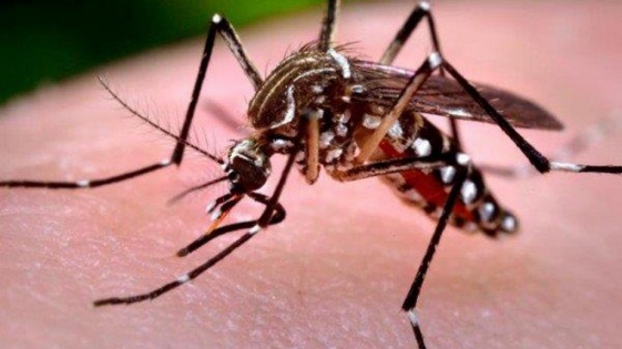 """""""Todos los años vamos a tener brotes de dengue"""""""