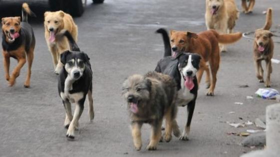 Apóstoles: proponen castrar y marcar perros callejeros