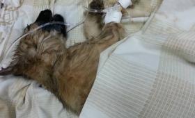 Criminal: le dieron dos garrotazos a una perrita y la tiraron a la basura