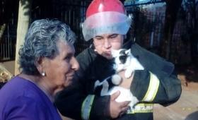 Emotivo rescate de un gatito que pasó 6 días en un árbol de 8 metros