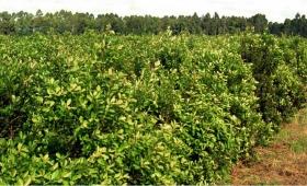 Créditos y donaciones para pequeños productores del Norte del país