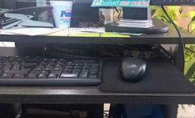 Encontró una víbora de 1,5 metros en su escritorio