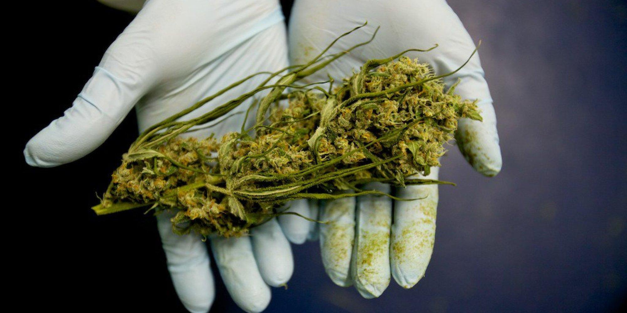 La OMS avala el cannabis medicinal: afirma que no es una droga
