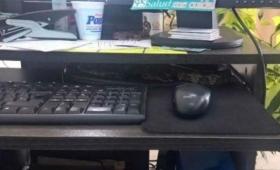 Video: la serpiente en el escritorio era una «ñacaniná»