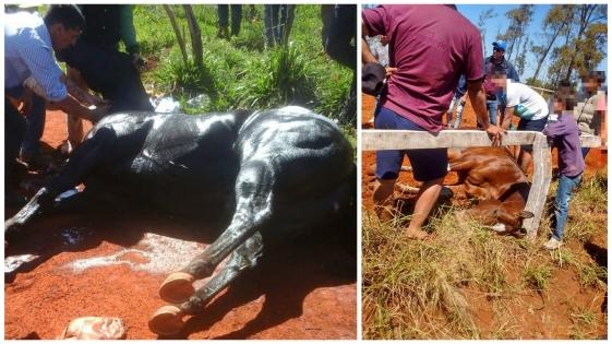 Denuncian apuestas ilegales en la causa por los caballos muertos en el Hipódromo