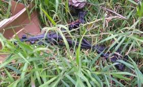 Chacra 81: utilizan terreno baldío como desarmadero