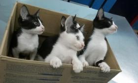 Jornada de adopción de mascotas en la Costanera