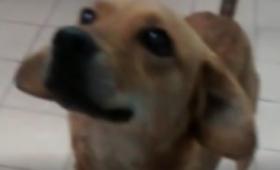 Conocé la historia de Molly, una perrita abandonada en el Imusa