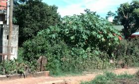 Dengue: ya hay 115 actas de infracción por baldíos con reservorios de mosquitos
