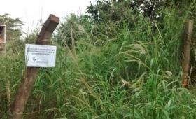 Dengue: inspeccionaron más de 6 mil terrenos baldíos