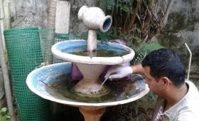 Dengue: detectaron altos índices larvarios en barrios de Posadas
