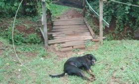 Cayó un cable de alta tensión y mató una perra