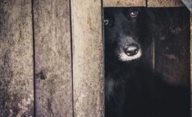 Multarán y denunciarán el maltrato animal
