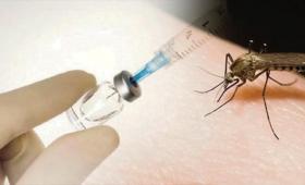 """Descubren una cepa bacteriana que """"bloquea"""" el dengue y el zika"""