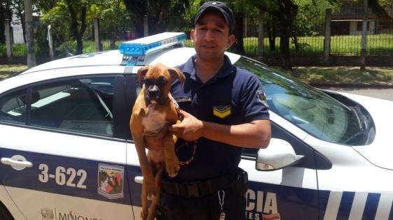 Policías recuperaron un perro robado