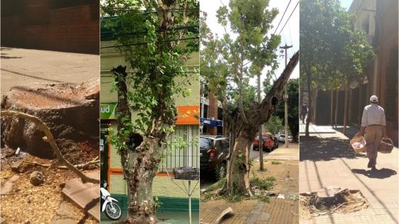 Irracional tala de árboles en Posadas