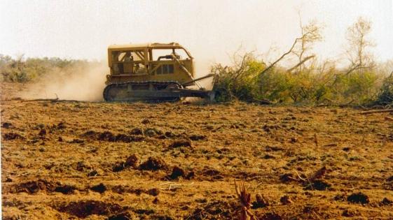 Casi el 40% de los bosques nativos destruidos en 2016 estaban protegidos por ley
