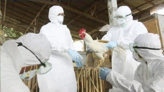 Gripe Aviar en Chile: recomiendan a turistas, evitar contacto con aves