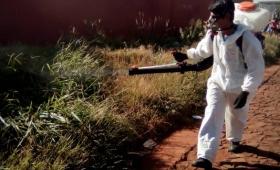 Fumigan para prevenir el dengue