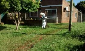Fumigaron 200 hogares de Barrio Jardín, Los Álamos y Mini City