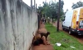 No está reglamentada la tenencia de perros de razas peligrosas