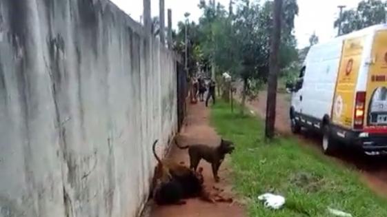Temor por ataques de perros pitbull en el Barrio Cocomarola Oeste