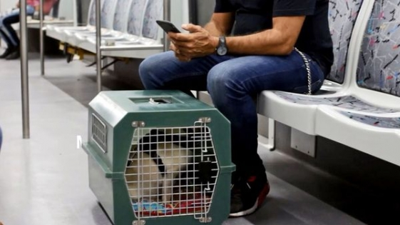 Subtes de Buenos Aires: desde este sábado se podrá viajar con mascotas
