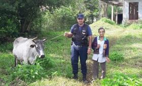 Detienen a cuatrero que robó una vaca