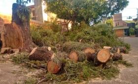 Cacería de árboles en Posadas