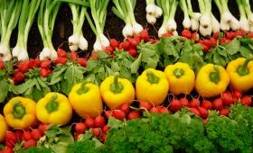 Impulsan la agroecología como nuevo modelo de producción