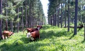 Impulso a los sistemas foresto-ganaderos