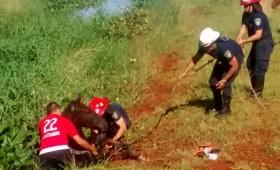 Así salvaron a una yegua atrapada en un pantano