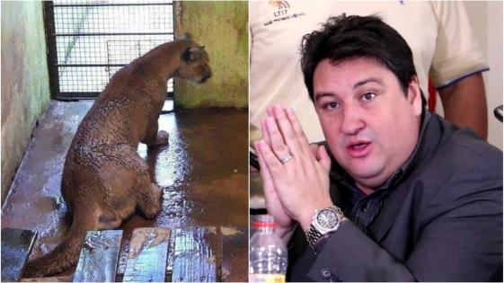 Solé Mases irónico con Closs por la captura del puma en Iguazú
