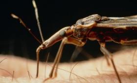 Científicos argentinos crearon una exitosa vacuna contra la enfermedad de Chagas