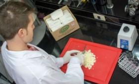 Científicos argentinos crean un queso que otorga beneficios al sistema inmunológico