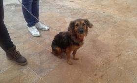 Caso Manuel Ifrán: la perra volvió sola a la casa