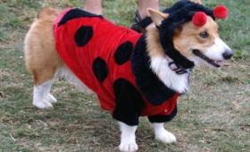 Desfile de perros este domingo en la Feria de Emprendedores