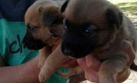 Más de 20 cachorros para ser adoptados en El Refugio
