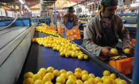 Los limones argentinos se exportarán por primera vez a México
