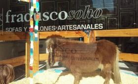 Repudio general al polémico caso del pony en la vidriera