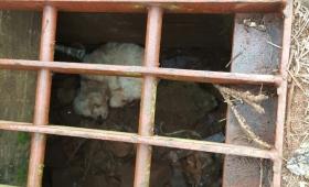 Rescataron a perros atrapados en alcantarillas