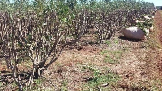 Corrientes: aprueban asistencia financiera a pequeños productores yerbateros