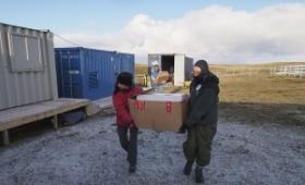Analizaron la mitad de las muestras extraídas de 123 tumbas en Malvinas